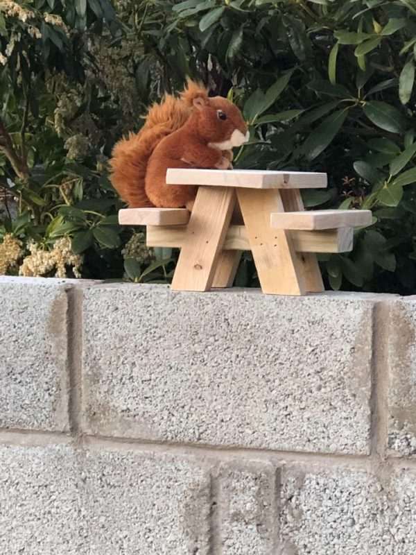 Bird Squirrel Picnic Table 2